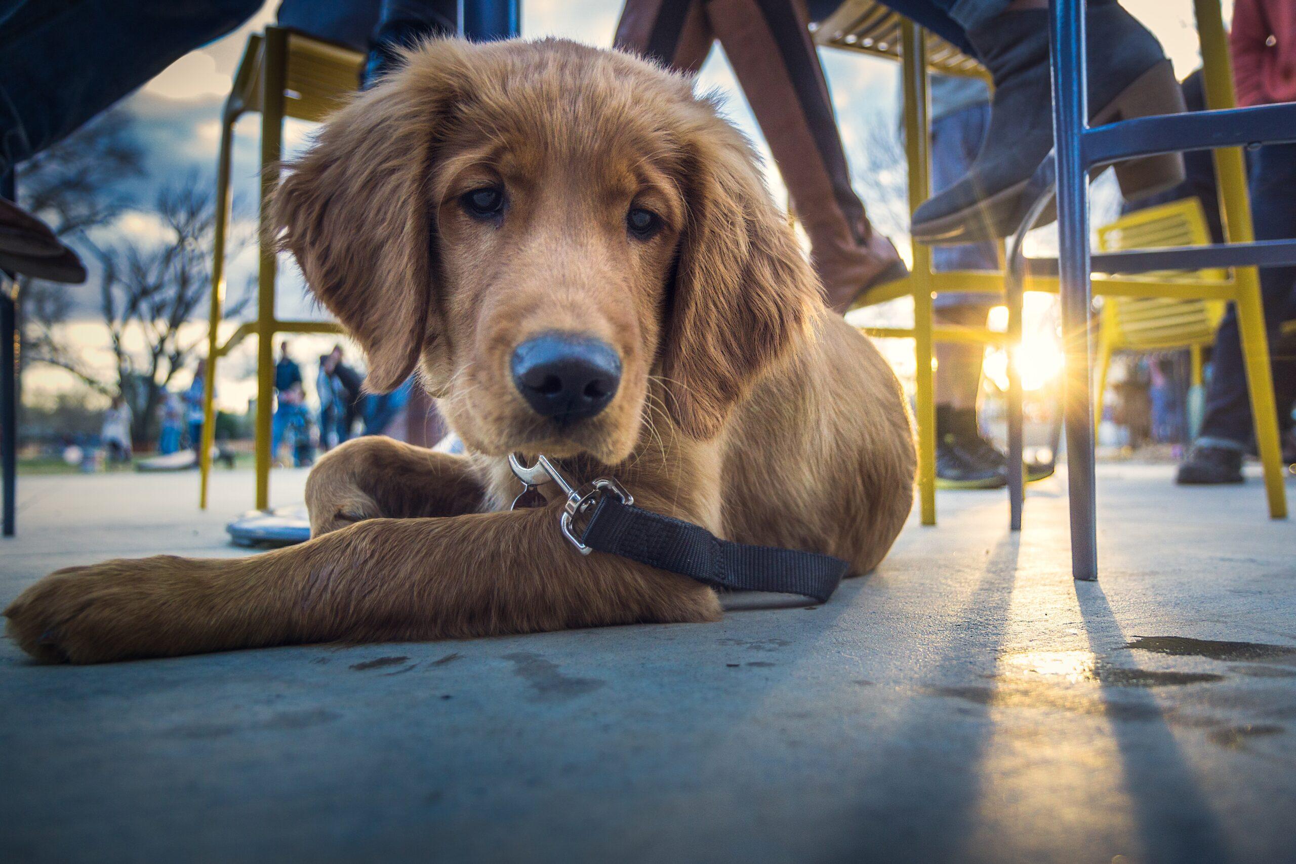 Bristol dog friendly restaurant