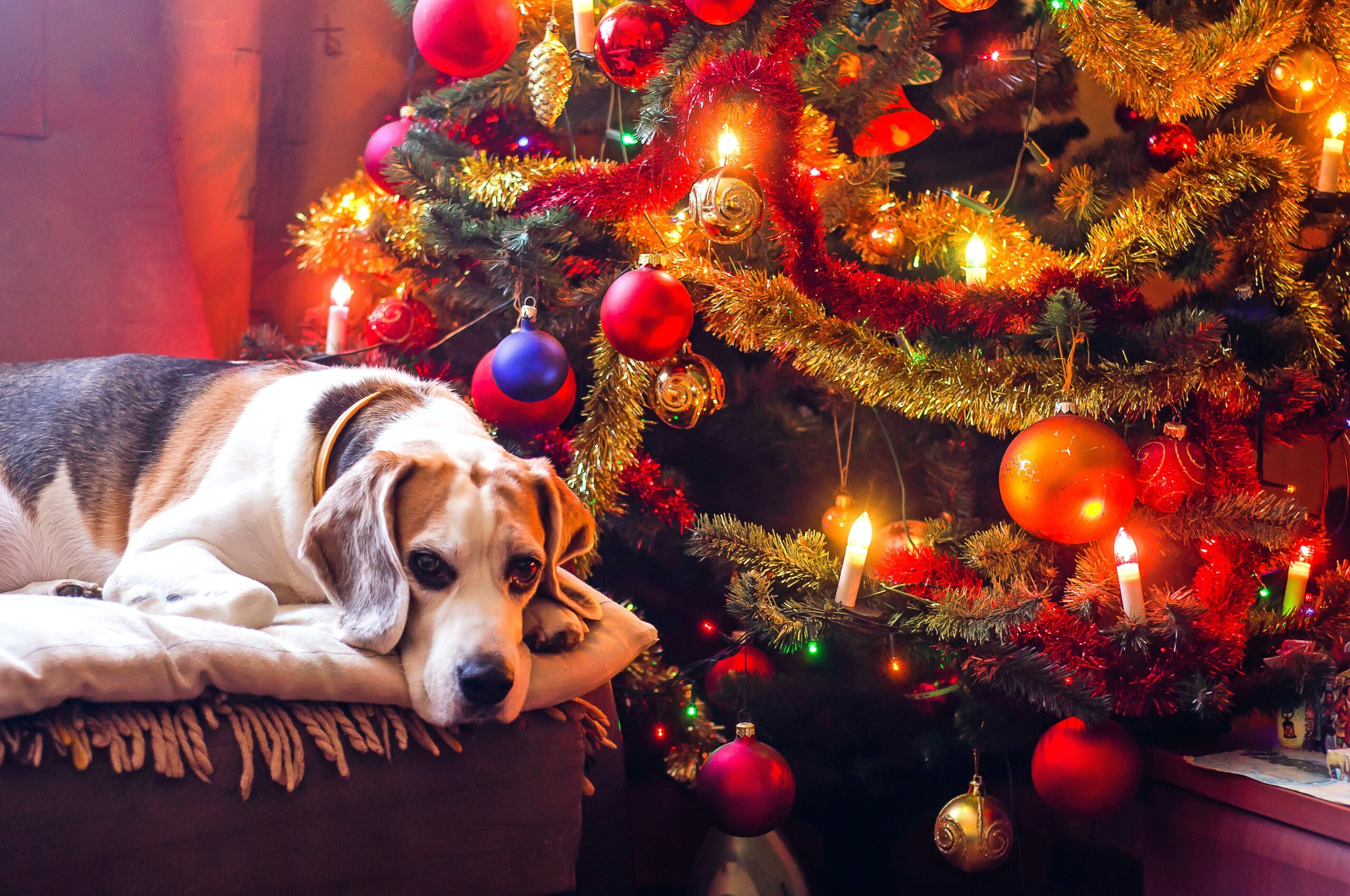 buy christmas tree bristol