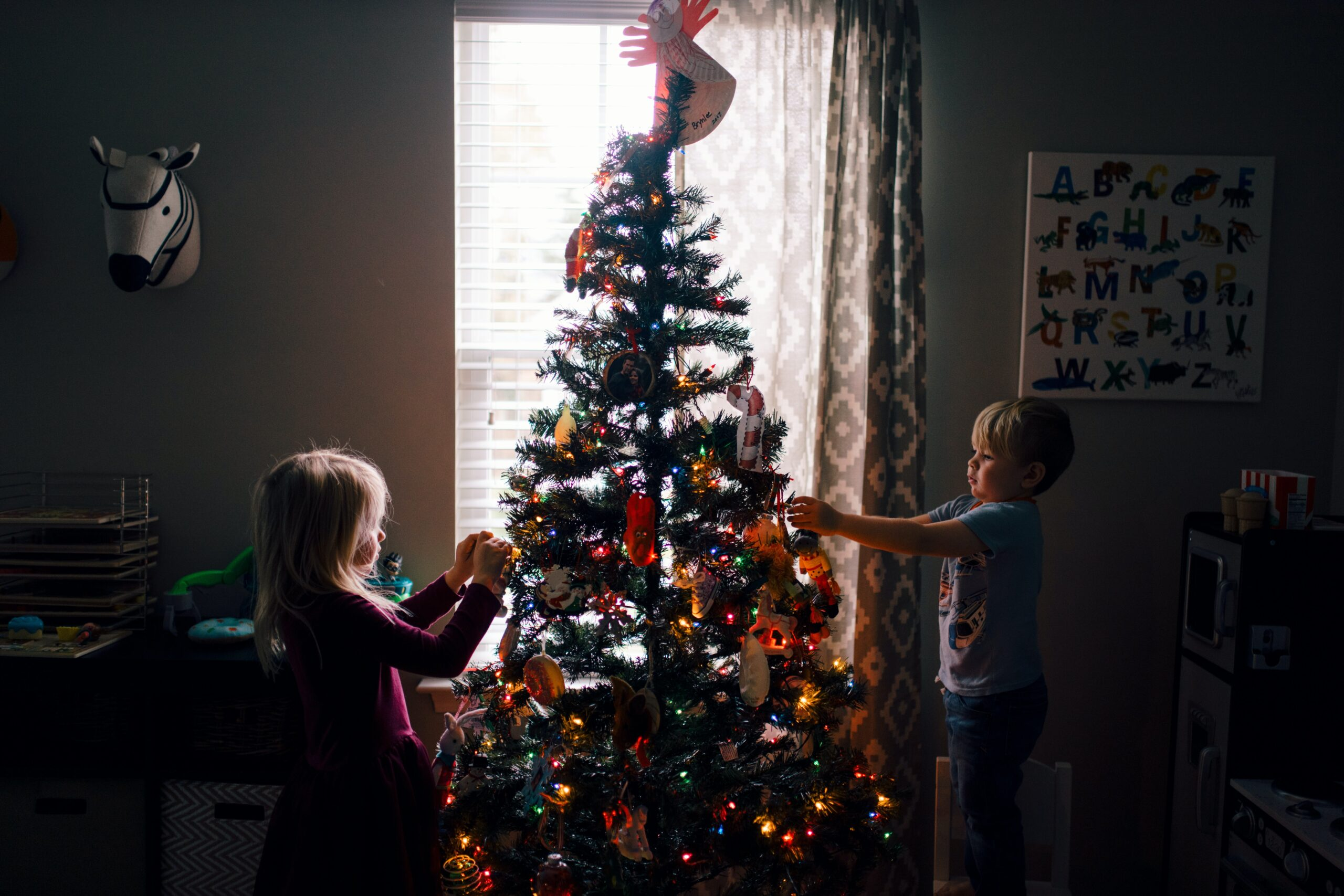 where to buy a christmas tree in bristol