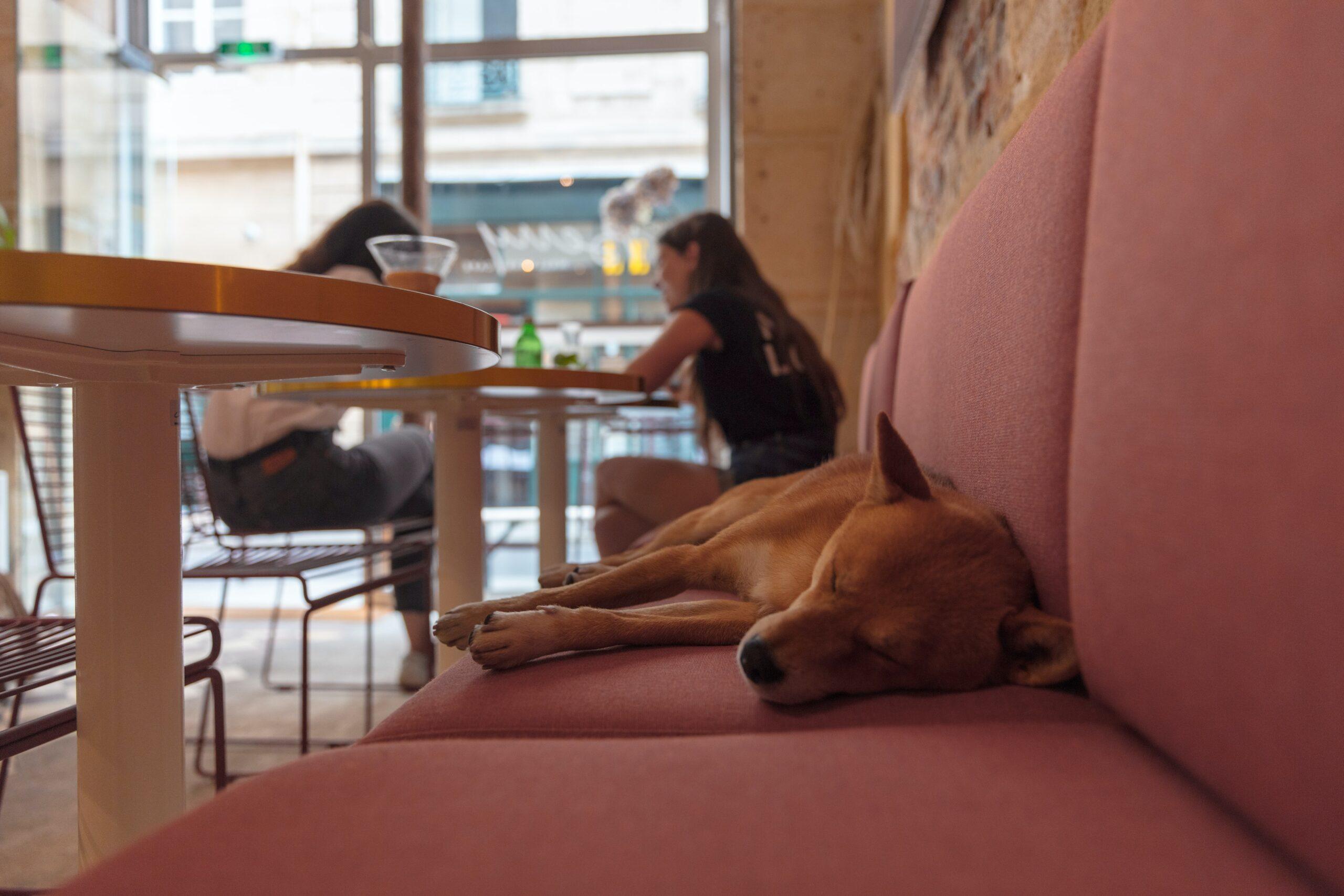 dog friendly restaurant