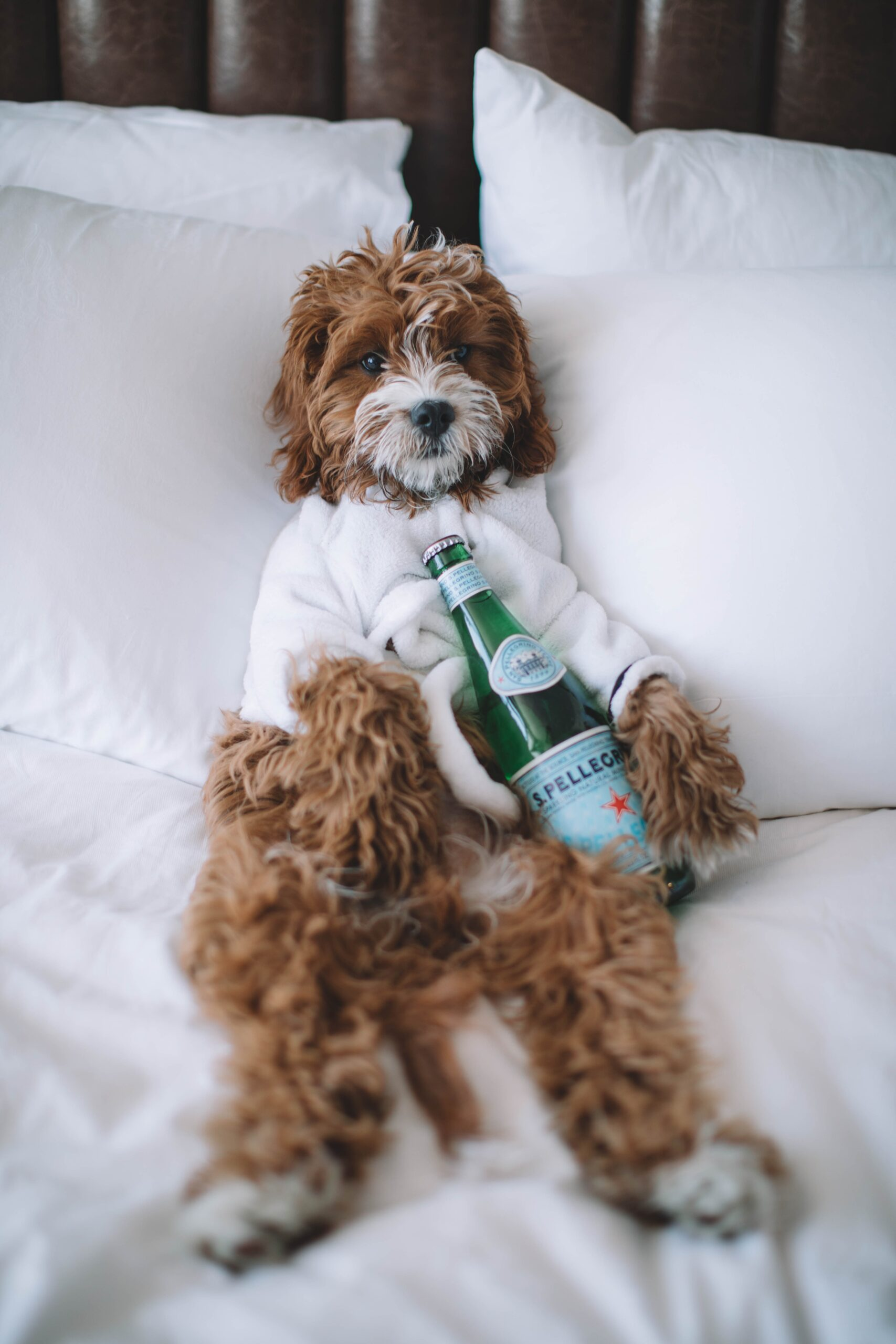 Best dog friendly hotels in Bristol
