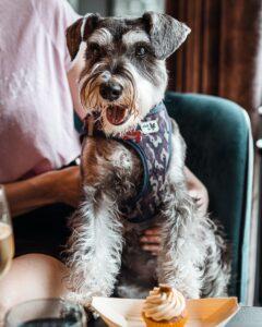 Dog Friendly Restaurants Bristol