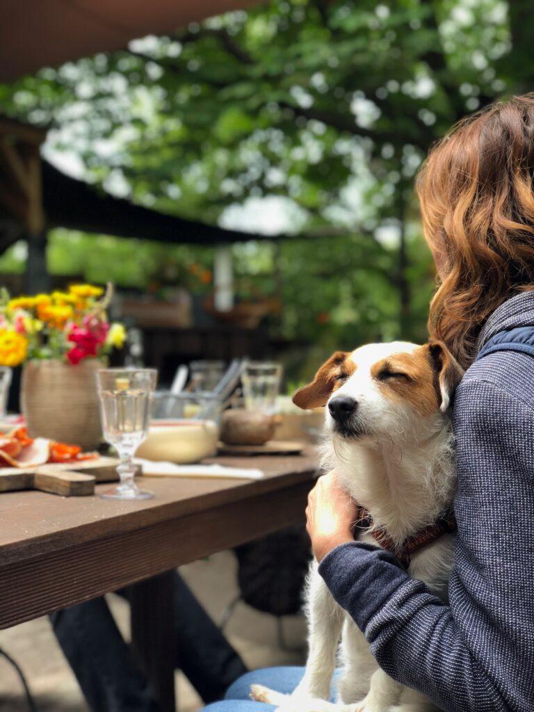 dog friendly restaurant bristol